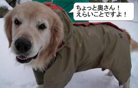 Snow00