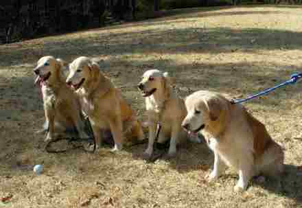 4dogs_2