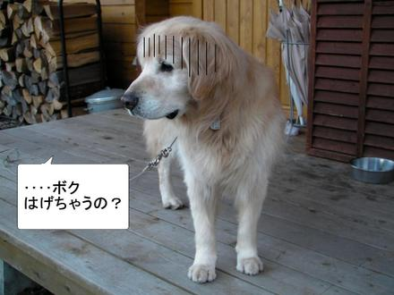Brush04