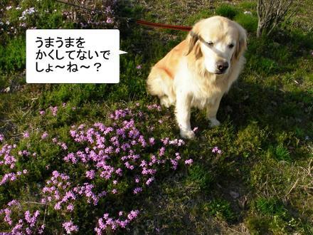 Sakura05