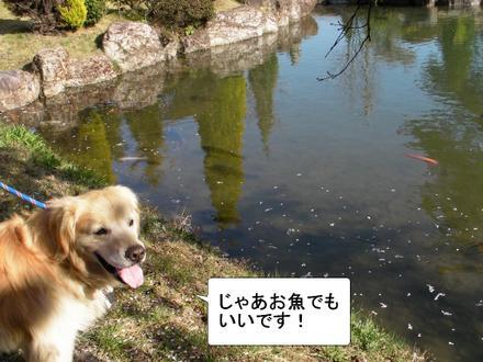 Sakura11_2