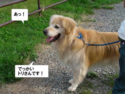 Miharasi02