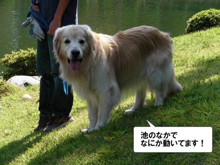 Ooshiba01