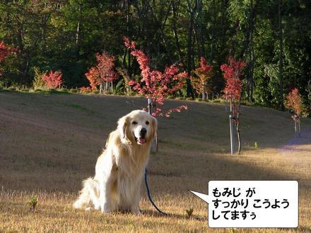 Dogcafe00_2