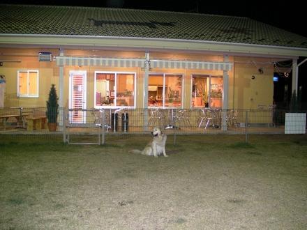 Dogcafe04