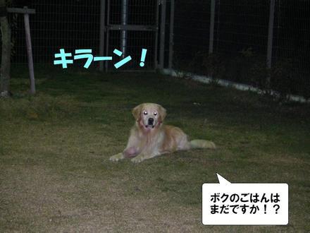 Dogcafe05